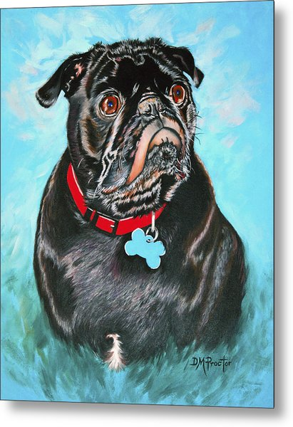 Metal Print featuring the painting Smug Black Pug by Donna Proctor