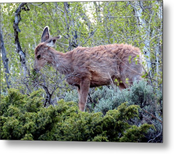 Metal Print featuring the photograph Snack Time by Karen Shackles