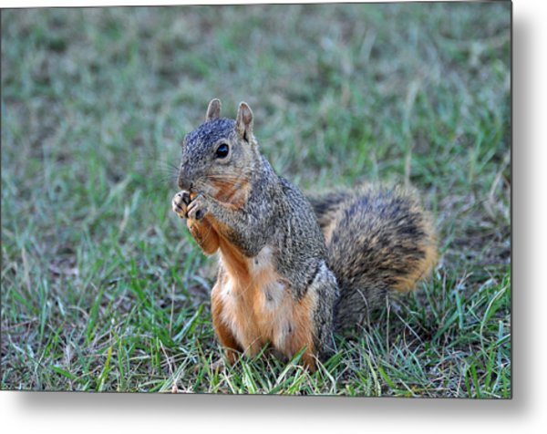 Snacking Metal Print by Teresa Blanton