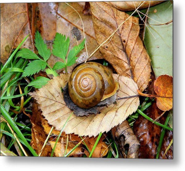 Snail Home Metal Print