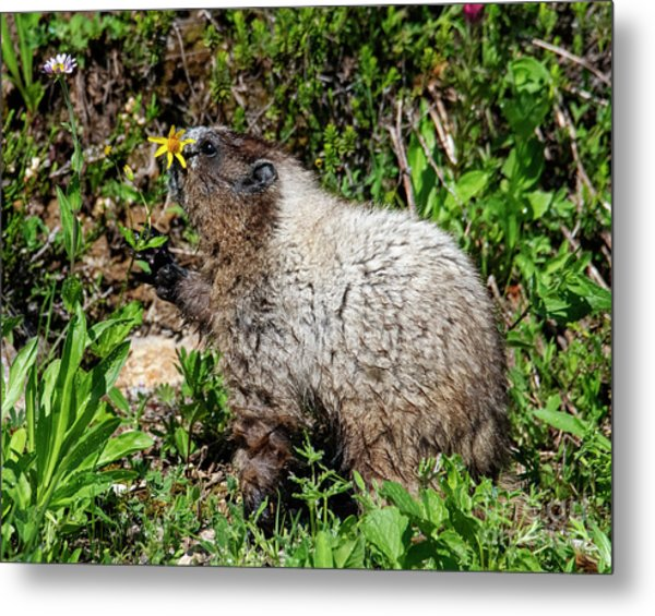Sniffing The Flowers Metal Print