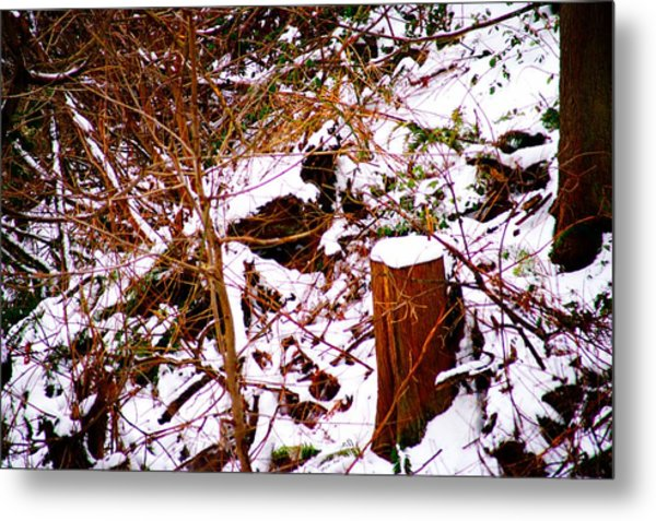 Snow And Tree Trunk Metal Print by Paul Kloschinsky