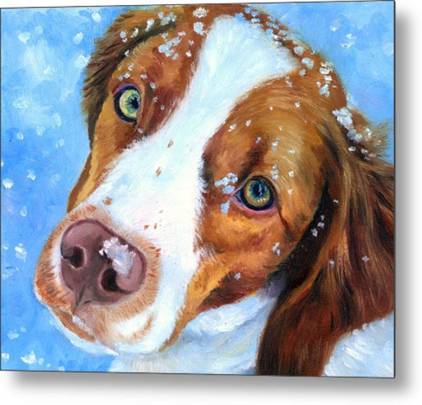 Snow Baby - Brittany Spaniel Metal Print