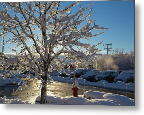 Snow-coated Tree Metal Print