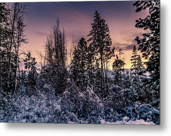 Snow Covered Pine Trees Metal Print