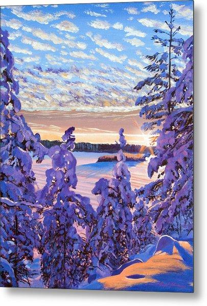 Snow Draped Pines Metal Print by David Lloyd Glover