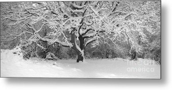 Snow Dusted Tree Metal Print