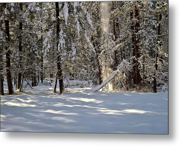 Snow Falling Off Cedars Metal Print