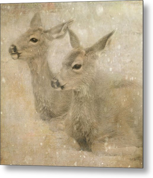 Metal Print featuring the photograph Snow Fawns by Sally Banfill