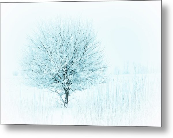 Snow Field Tree Metal Print