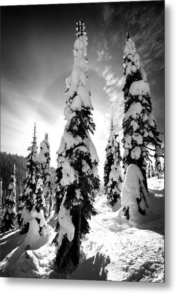 Snow Laden Tree Metal Print