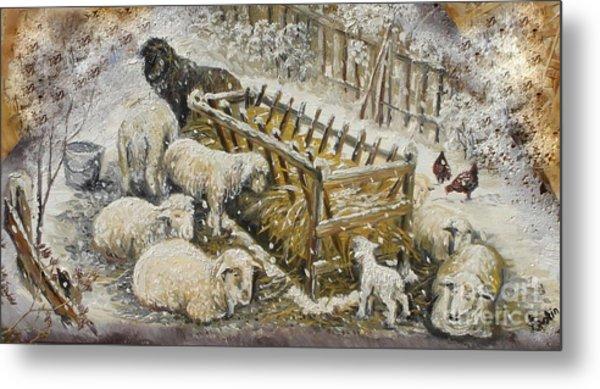 Snow Lambs Metal Print