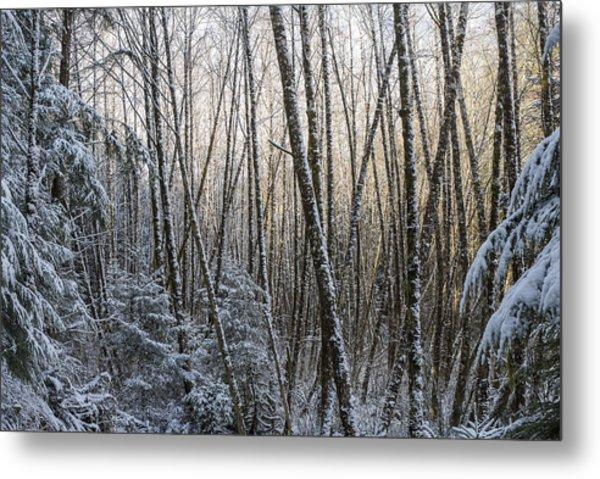 Snow On The Alders Metal Print
