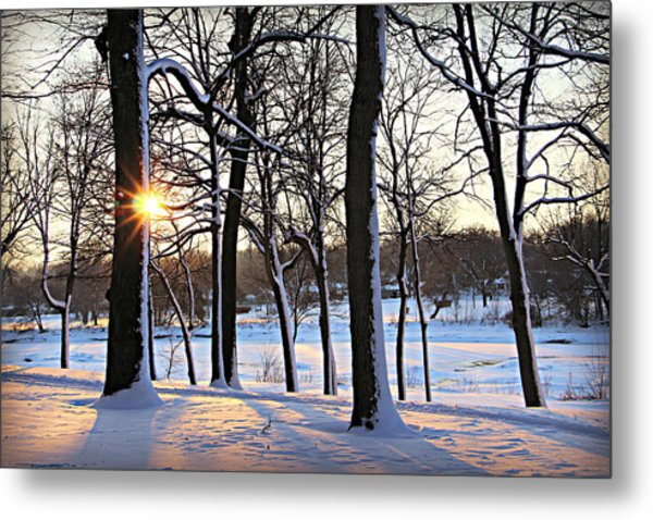 Snow Starred Grove Metal Print