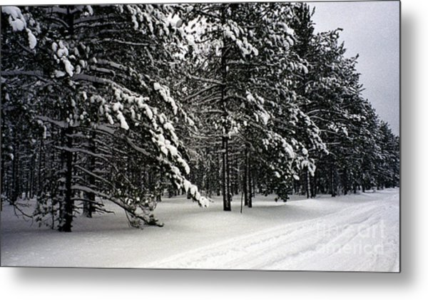 Snow Trail Metal Print by Cathy Weaver