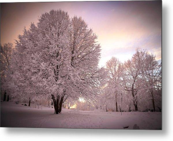 Snow Tree At Dusk Metal Print