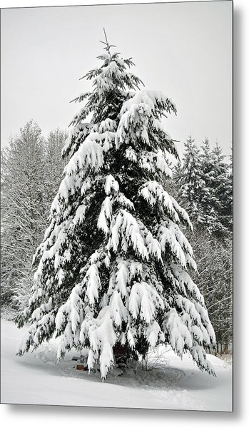 Snow Tree Metal Print by Matthew Adair