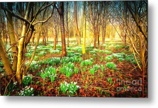 Snowdrops In The Woods Metal Print
