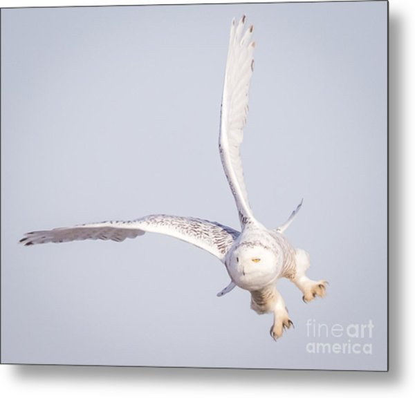 Snowy Owl Flying Dirty Metal Print