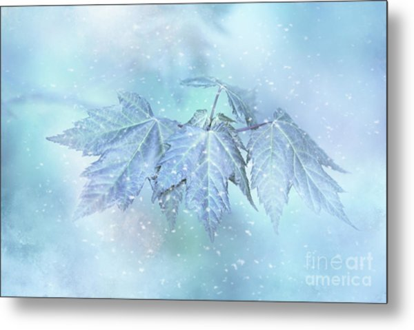 Snowy Baby Leaves Metal Print