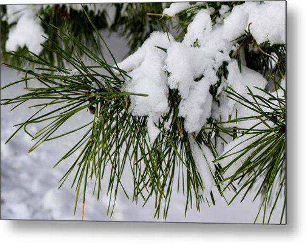 Snowy Branch Metal Print