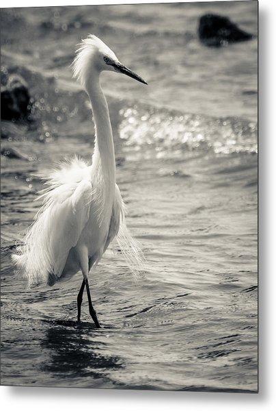 Snowy Egret At Lake Chapala Metal Print by Dane Strom