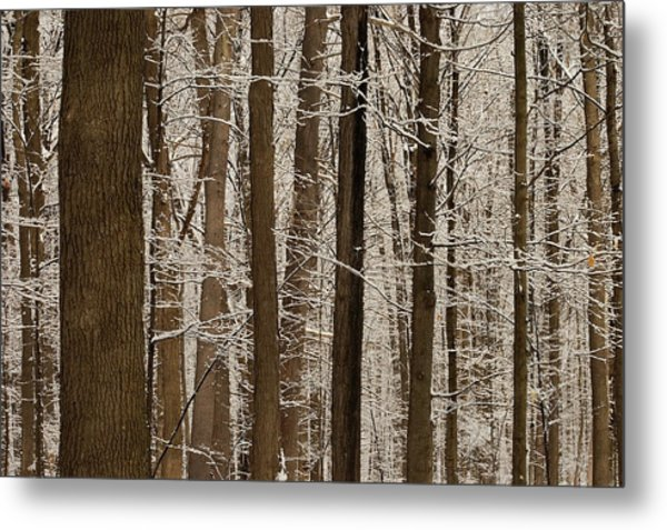 Snowy Forest Elevation Metal Print