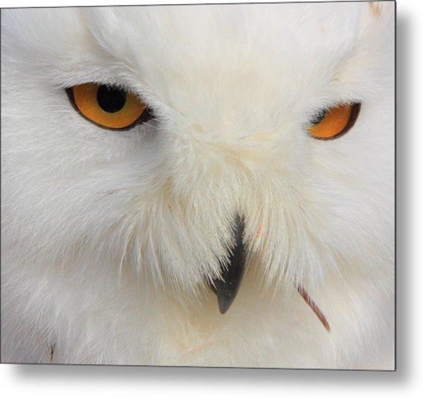 Snowy Owl Close Metal Print by Larry Federman