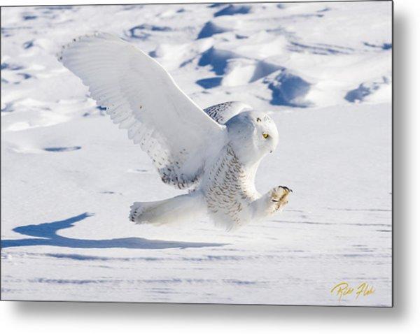 Snowy Owl Pouncing Metal Print