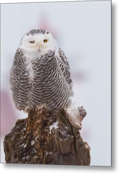 Snowy Owl Winking Metal Print