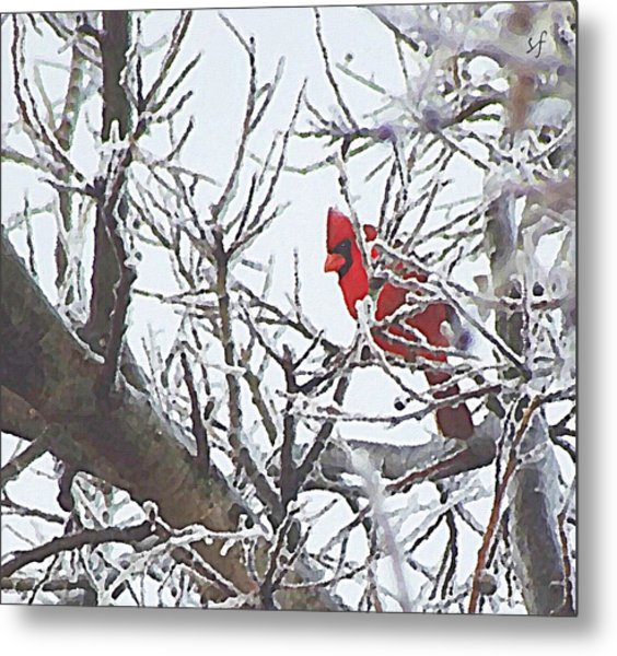 Snowy Red Bird A Cardinal In Winter Metal Print