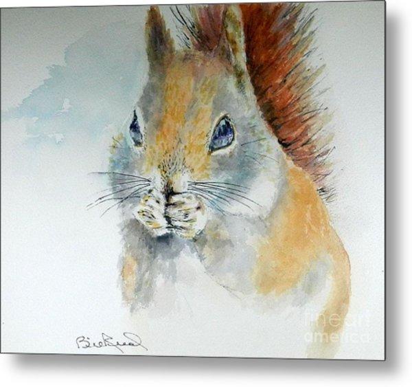 Snowy Red Squirrel Metal Print