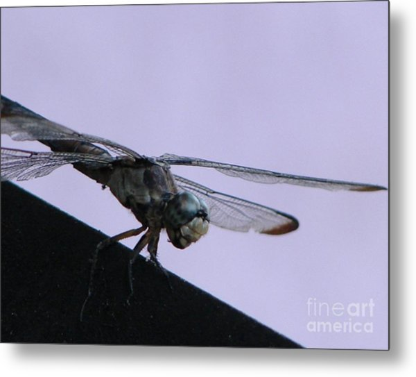 So Many Bugs So Little Time Metal Print