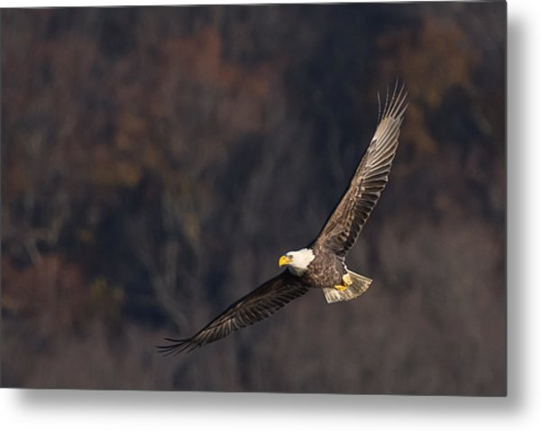 Metal Print featuring the photograph Soaring by Cindy Lark Hartman