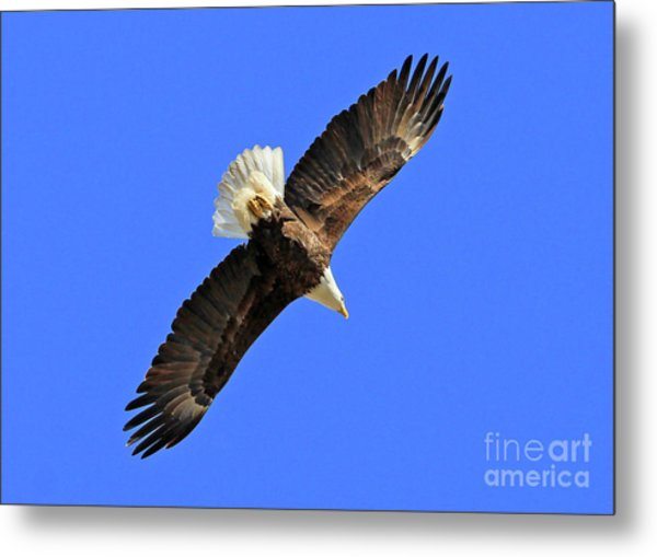 Soaring Into The Blue  Metal Print