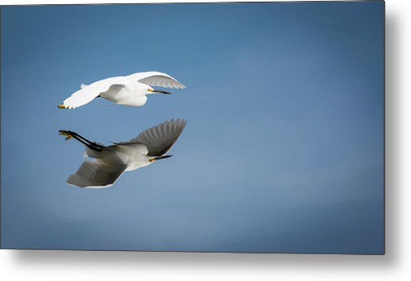 Soaring Over Still Waters Metal Print