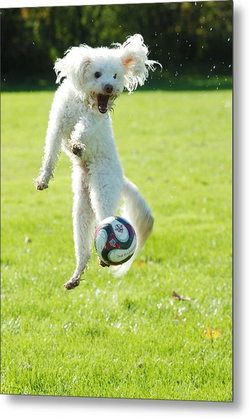 Soccer Dog-5 Metal Print