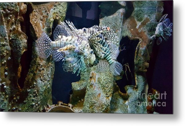 Socializing Fish Metal Print