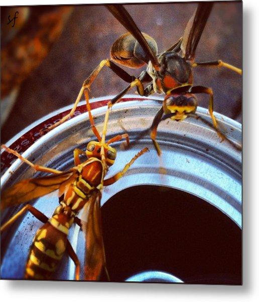 Soda Pop Bandits, Two Wasps On A Pop Can  Metal Print