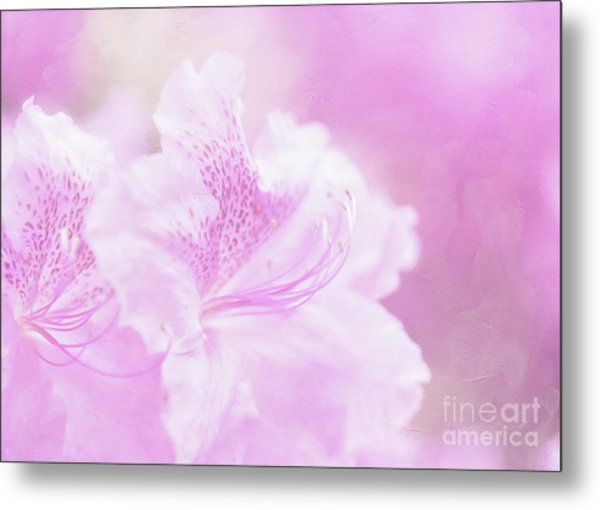 Soft And Lovely Pink Rhododendrons  Metal Print