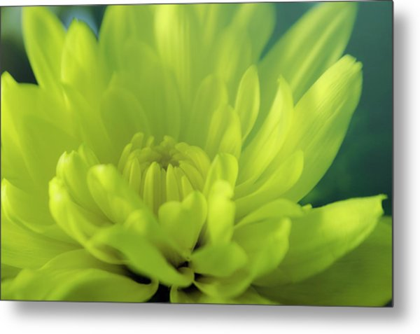 Soft Center Metal Print