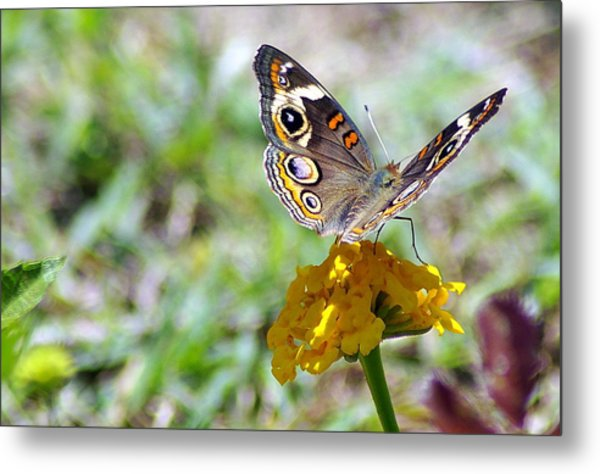 Soft Landing 3 Metal Print by Don Prioleau