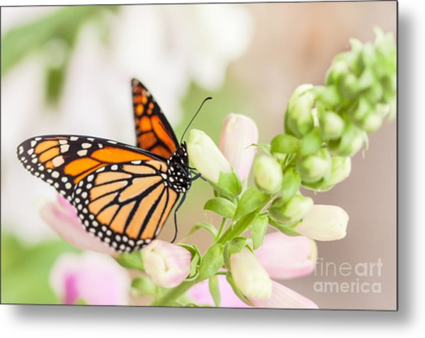 Soft Spring Butterfly Metal Print