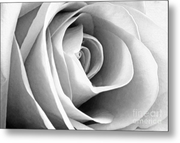 Softened Rose Metal Print