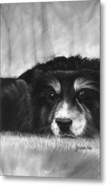 Solitary Dog Metal Print by Jessica Kale