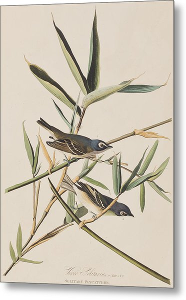 Solitary Flycatcher Or Vireo Metal Print
