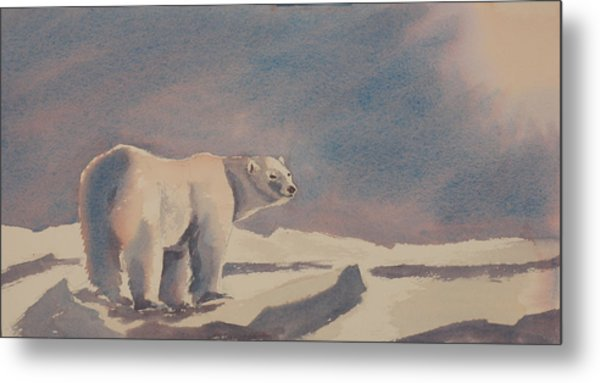 Solitary Polar Bear Metal Print by Debbie Homewood