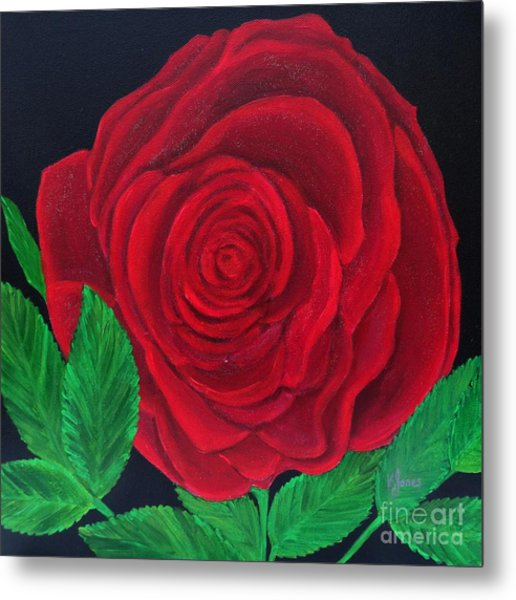 Solitary Red Rose Metal Print