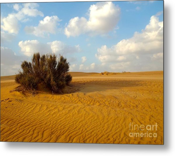 Solitary Shrub Metal Print