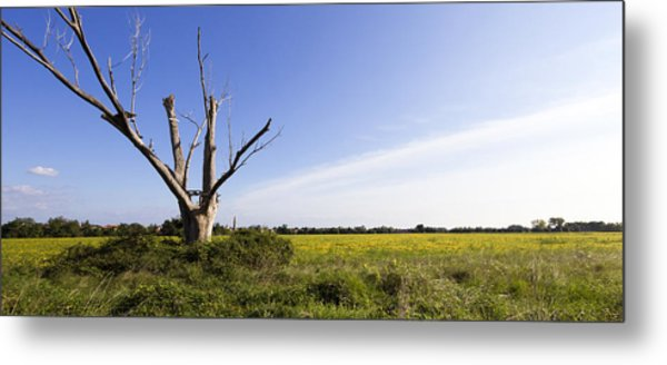 Metal Print featuring the photograph Solitary Tree by Helga Novelli